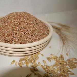 Продаю зерно,  пшеница для проращивания.