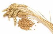 Пшеница фуражная 2 050 000 т. С НДС