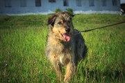 Верный друг и отличная собака